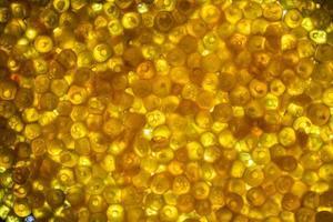 fundo de ovas de peixe amarelo iluminado foto