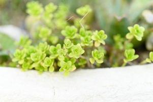 plantas suculentas em um canteiro de flores ao ar livre foto