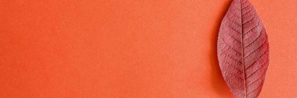 única folha de cereja caída vermelha de outono em fundo de papel vermelho foto
