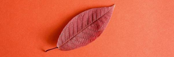 única folha vermelha de cereja caída de outono em um fundo de papel vermelho foto