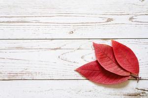 várias folhas caídas de outono vermelhas em um fundo claro de madeira foto