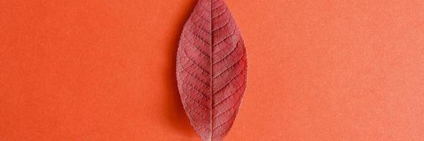 folha vermelha de outono cereja caída em um fundo de papel vermelho foto