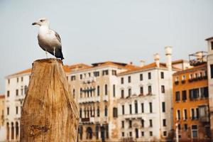 uma gaivota pousada em um tronco contra casas venezianas