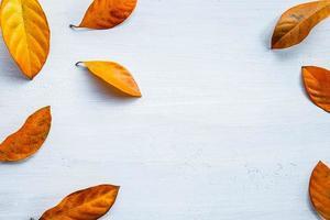 folha de outono plana lay foto