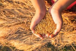 mãos segurando arroz orgânico