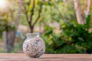 plantar árvores em vasos, plantas do amor e o conceito de meio ambiente foto