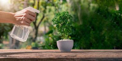 uma pessoa borrifando água em uma planta em um vaso foto