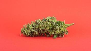 botão de cannabis em um fundo vermelho foto
