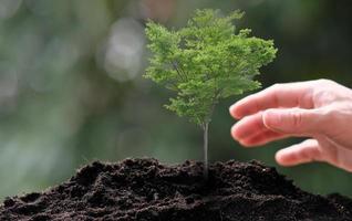 pequena árvore crescendo em fundo verde