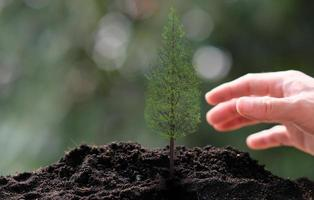 pequena árvore crescendo em fundo verde foto