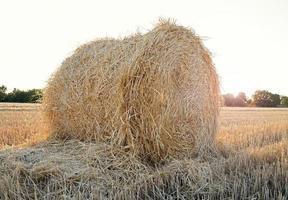 um fardo de palha de trigo em um campo agrícola foto