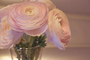 flores rosa ranúnculo fechadas em um vaso com um fundo desfocado foto