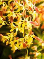 flores de orquídeas vermelhas e amarelas