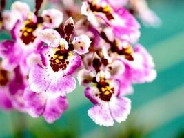 flores roxas de orquídea
