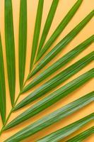 folha de palmeira isolada em fundo laranja foto