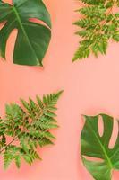 Monstera e folhas de samambaia em fundo rosa foto