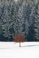 árvore solitária em cena de neve de inverno