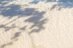 sombra de folhas de árvore na praia tropical no verão foto