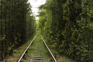 trilhos de trem através de um túnel verde