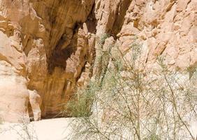 vegetação e rochas foto