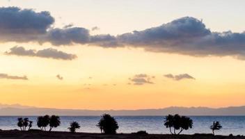 silhueta de palmeiras ao pôr do sol foto