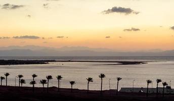 silhuetas de palmeiras ao pôr do sol foto
