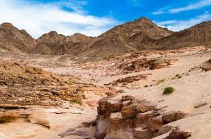 desfiladeiro deserto com vegetação foto