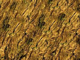 close-up de casca de árvore para plano de fundo ou textura foto