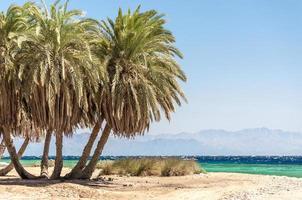 palmeiras com o oceano e as montanhas ao fundo foto