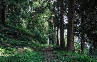 trilha de caminhada em uma floresta foto
