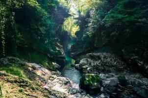 riacho em uma floresta verde foto