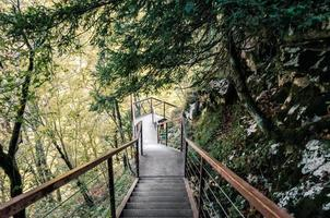 escada de metal em uma floresta foto