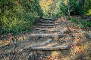 trilha com escada de madeira foto