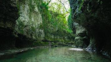 rio nas montanhas com plantas verdes foto