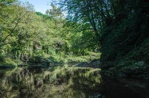 árvores verdes e um rio foto
