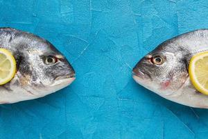 peixes de postura plana no fundo azul