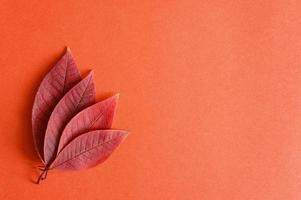 folhas vermelhas de outono caídas de cereja em um fundo de papel vermelho foto