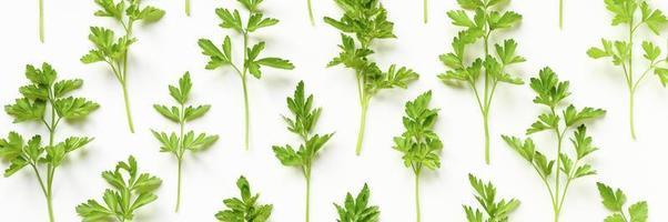 folhas de salsa orgânica fresca dispostas em uma fileira em um fundo branco foto
