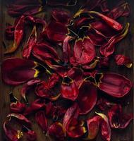 fundo floral de pétalas de tulipa vermelha em fundo de madeira rústico, vista superior