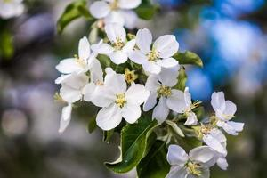 lindas flores na primavera foto