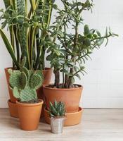 plantas de interior verdes sobre a mesa de uma casa foto