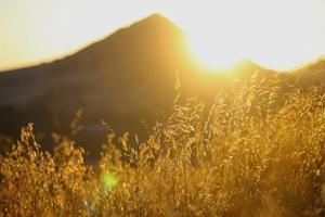 grama seca nas colinas da Califórnia durante a hora dourada foto