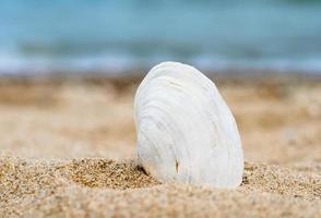 concha branca na areia foto