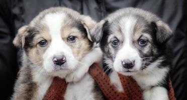 close-up de dois cachorrinhos foto