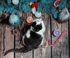 gato preto e branco com árvore de natal foto