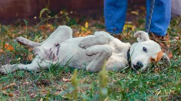 cachorro branco deitado na grama foto