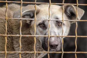 cachorro em uma gaiola de metal foto