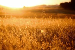 hora de ouro na região seca da Califórnia foto