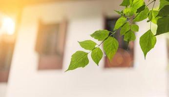raios de sol pela manhã com pequenas folhas verdes perto de uma casa foto
