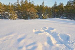 anjo da neve com uma floresta ao fundo